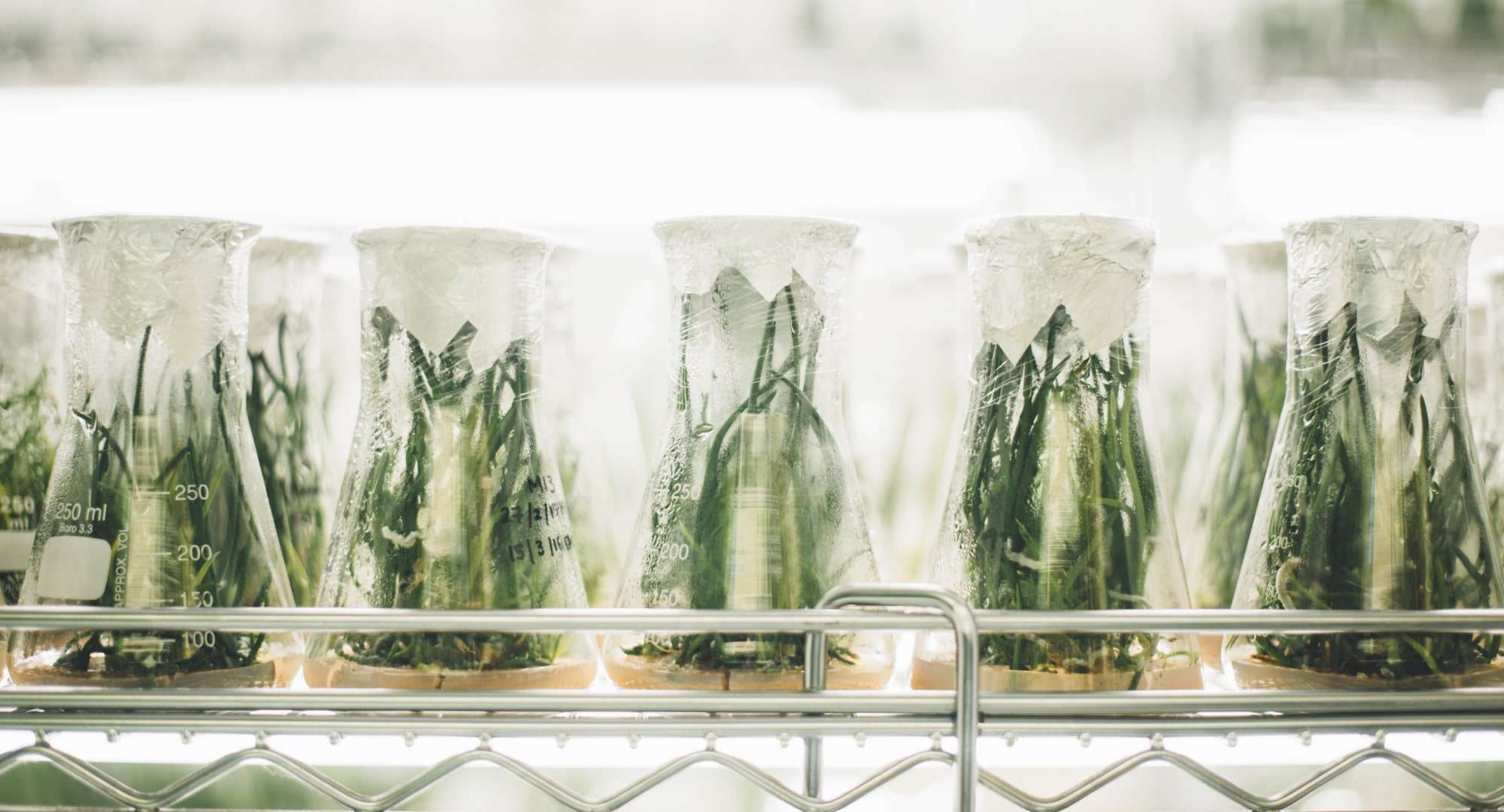 Aquatic plants in a laboratory